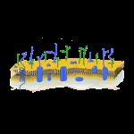 membran_web
