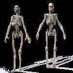 skelet_web